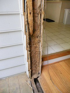 Example of termites damaging a structure